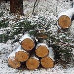 Лесничий за взятку в 15 тысяч рублей разрешила вырубить новгородский лес