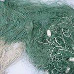 «Рыба мечты» подвела новгородских рыбаков под суд