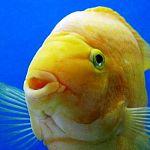 Новгородские приставы арестовали аквариумных рыбок