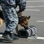 Вчера полиция искала бомбу у «Руси», сегодня – на автовокзале