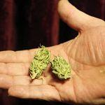 Новгородский подросток может отправиться в колонию за наркотики