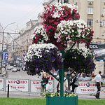 Объёмные цветочные композиции появятся на улицах Великого Новгорода