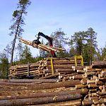 Новгородские лесопромышленники задолжали бюджету