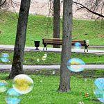 День мыльного пузыря (фото)