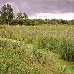 Земля многодетным... в болоте и с чужими огородами