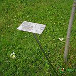 Фотофакт: хулиганы сорвали памятную табличку с именем новгородского губернатора