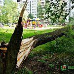 Фотофакт: на улице Нехинской рядом с детской площадкой рухнуло дерево