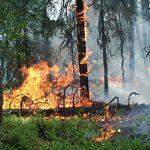 Пожарные будут проводить рейды против поджигателей костров