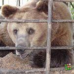 Корреспондент «ВН» встретилась с медведем, который когда-то чуть её не съел