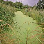 Землю для многодетных освободят от труб и от болота