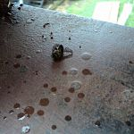 Пчёлы цемента – не боятся!