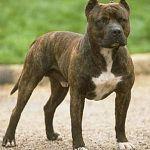 Читатели: «Зло кроется не в агрессивных собаках, а в их хозяевах»