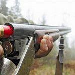 За год в Новгородской области можно застрелить 219 медведей и 50 выдр