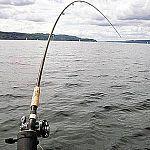 Новгородские депутаты борются с коррупцией при распределении квот на вылов рыбы
