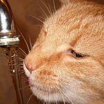 Вода в кранах новгородцев попахивает, но это пройдёт