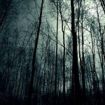Сотрудники новгородского музея разыскивают в лесу потерявшуюся сотрудницу