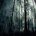 Поиски потерявшейся в лесу сотрудницы новгородского музея приостановлены