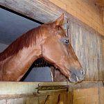 В новгородское отделение полиции доставили лошадь
