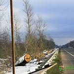Тополиную аллею на участке ФАД «Россия» при подъезде к Великому Новгороду пустили «под топор» (фото)