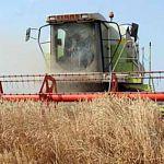 В Новгородской области собрали самый большой урожай зерновых за 14 лет