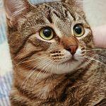 Кот Володя, кошка Черепашка и другие животные в новой подборке от фонда «Спасение»