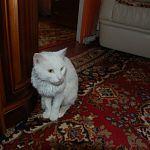 Блоги: еще одна подборка замечательных животных от фонда «Спасение»
