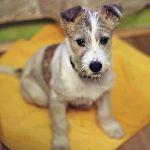 Бездомного щенка из подборки «Ваших новостей» приютил руководитель радио  «Ретро FM»