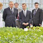 Дмитрий Медведев дал поручения по итогам совещания в «Новгородских теплицах»