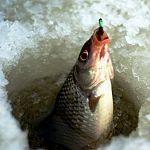 Сотрудники новгородской рыбоохраны вернули рыбу в озеро