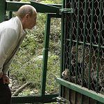 «Акрон» шефствует над дальневосточным леопардом