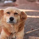В Панковке водитель съехал в кювет, чтобы не раздавить собаку