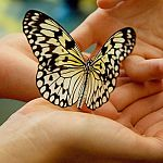 РЕН ТВ рассказывает о том, как новгородской «девочке-бабочке» помогают всей страной