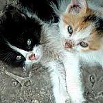 Следователи и ветеринары с трудом попали в дом с кошками в Новгородском районе