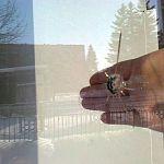 В Великом Новгороде в окно пустили пулю, после – утку