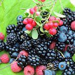 «Медовый дом» будет принимать большие объёмы фруктов и ягод у новгородцев
