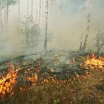 В Новгородской области начались лесные пожары