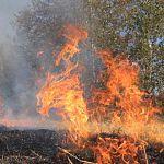 В Новгородской области установили пожароопасный сезон