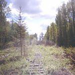 Новгородские судебные приставы возвращают государству узкоколейку в лесах Новгородчины