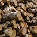 В Новгородской области отец и сын запаслись дровами на 2,8 и 2,6 года условно