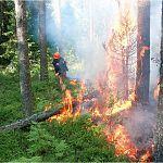 Новгородцы отправились тушить лесные пожары в Тверской области
