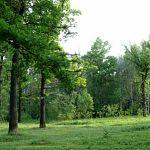 Более 230 миллионов рублей Новгородская область выручила от аренды лесов