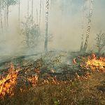 От пожаров новгородские леса пострадали на сумму 323 тысячи рублей