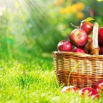 Сегодня – праздник Преображения Господня, Яблочный Спас