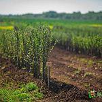 Областные сельскохозяйственные программы скорректируют после совещания в Курске, посвященного санкциям