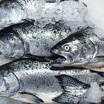 Рыба, птица, мясо – подорожали в цене