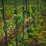 В Новгородском районе намерены развивать садоводство