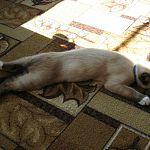 Рикки-Тикки-Тави по-новгородски: кот защищает хозяев от гадюк