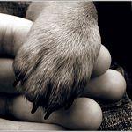 Сегодня в НовГУ обсудят вопросы защиты бездомных животных