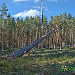 Сергея Митина наградили за сбережение и приумножение лесных богатств