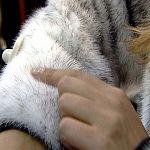 Новгородские приставы арестовали забытую норковую шубу